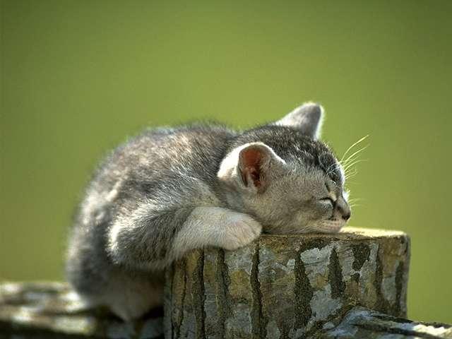 kitten134