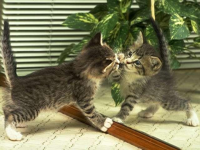 kitten150