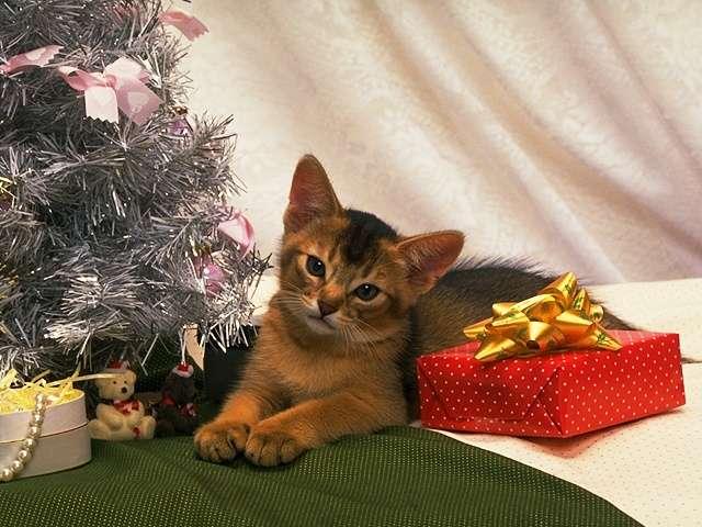 kitten159