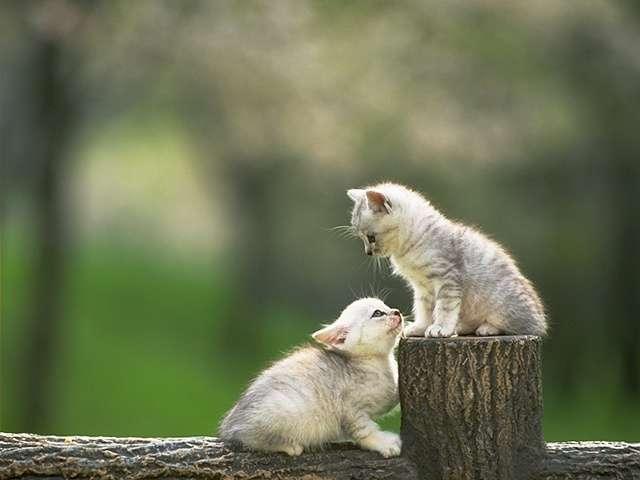 kitten95