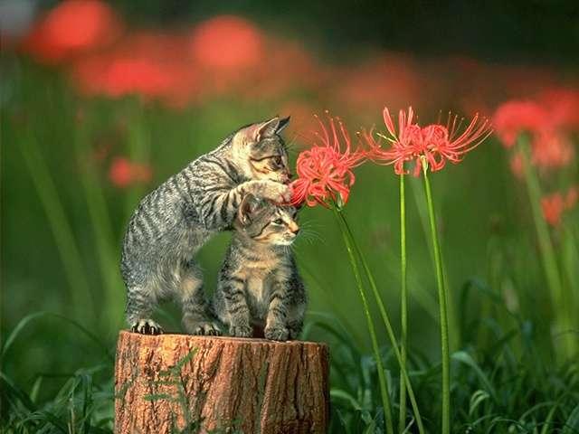 kitten97