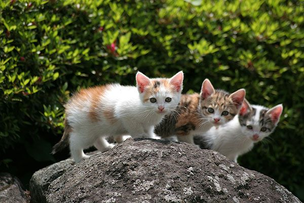kittens on the rock