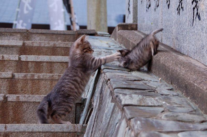 kittens popalsya