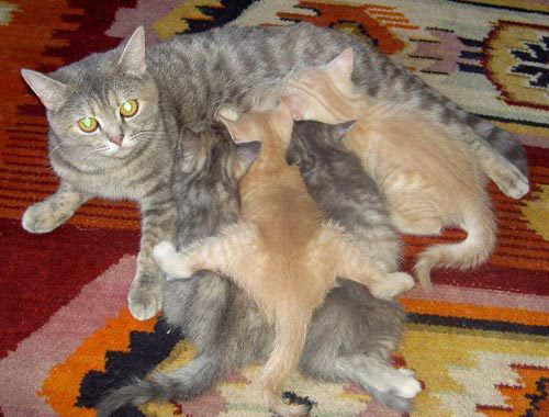 kitties and mother