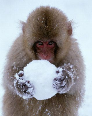 monkey and snowball