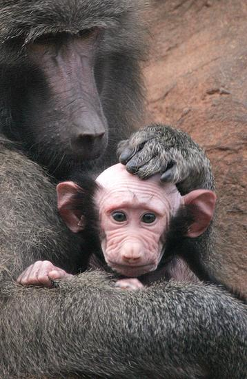 monkey mother and son