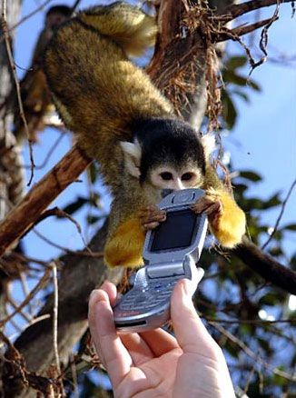 monkey need mobile phone