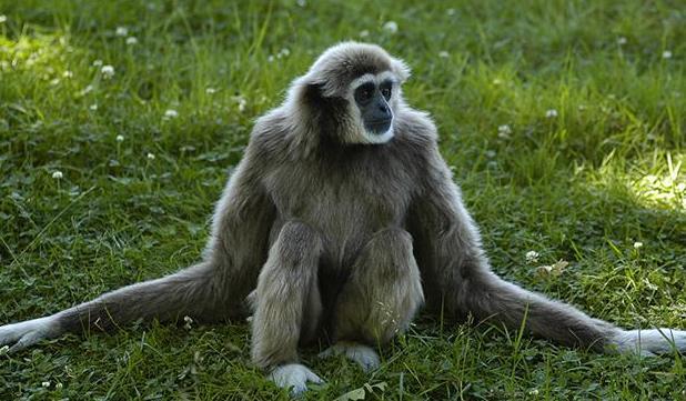 monkeys meditation