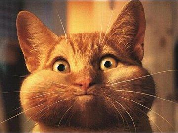 op cat2