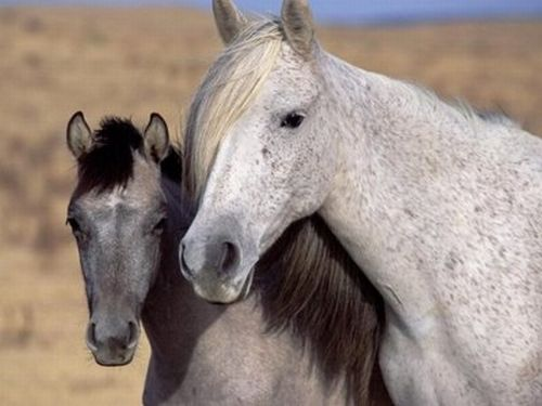 parents horses