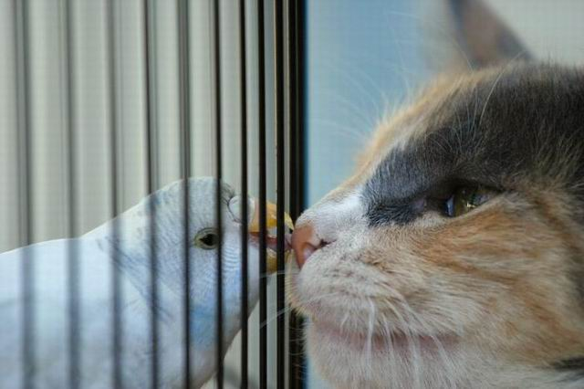 parrot and cats nose