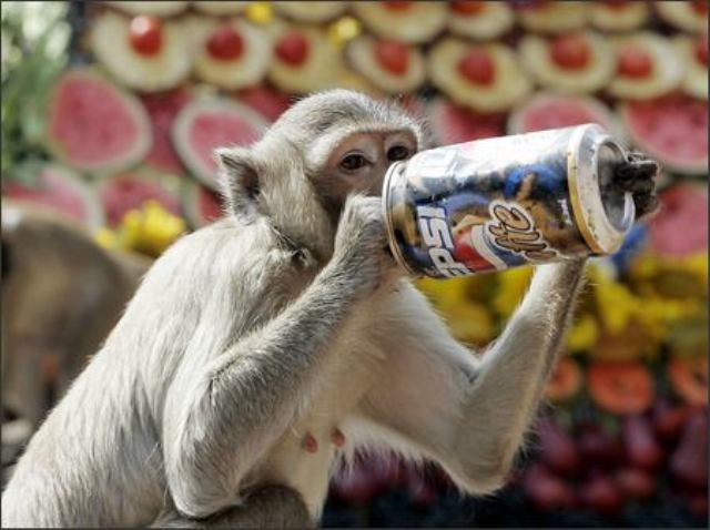 pepsi cola for monkey