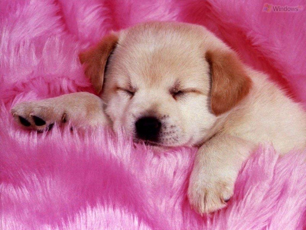 pink dog 1024 768