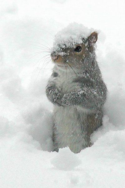 squirrel under snow