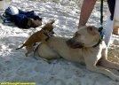 ambitous dog