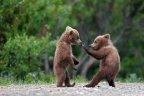 bears kung-fu