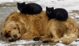 black cats on dog