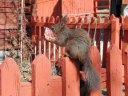 breakfast for squirrel
