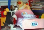 cat and bed