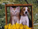 dog and cat frefvre