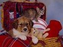 dog and cat frejl