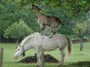 лошади, другие: Находчивость