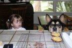собаки: Смотри, как надо тащить незаметно...