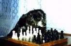 dog chess master