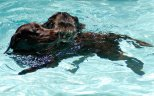 dog looking swiming cat-2
