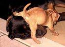 dog nurse 01
