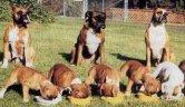 dogs nurse