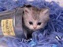 kitten in a can