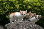 kittens on the rock