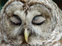 owl sleep