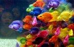 рыбы: Рыбки