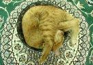 round cat