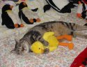 sleep with favorite toy