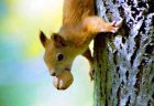 squirell and the nut