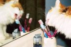 tooth paste for cat