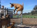 wow jumping dog