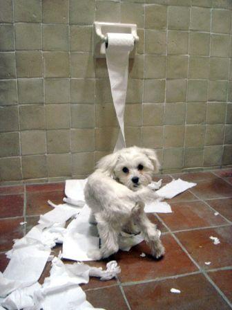 toilet paper dog