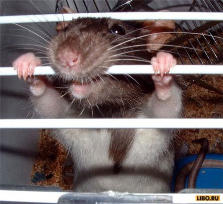 vi mouse
