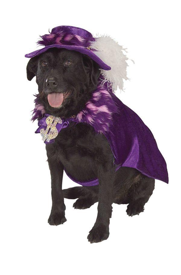 violet dog