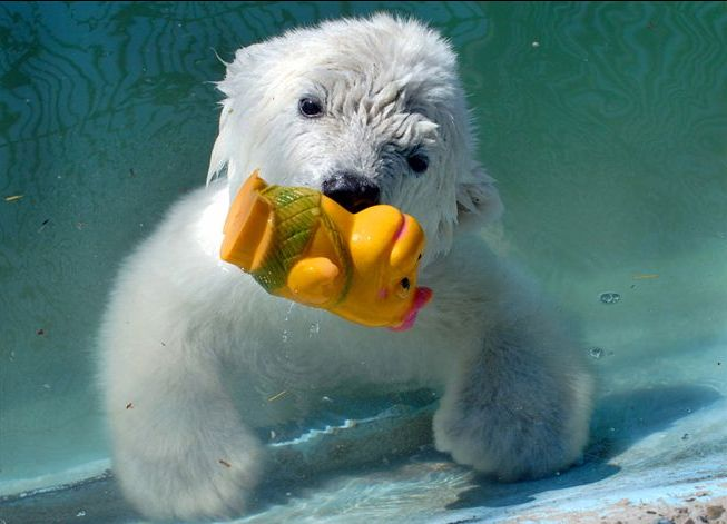 white bear and water toy