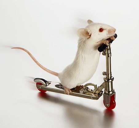 white mouse on skate board