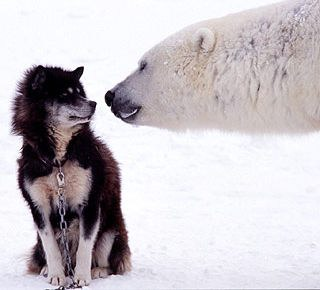 white bear and dog