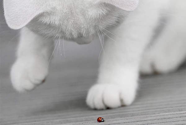 white kitty and bug