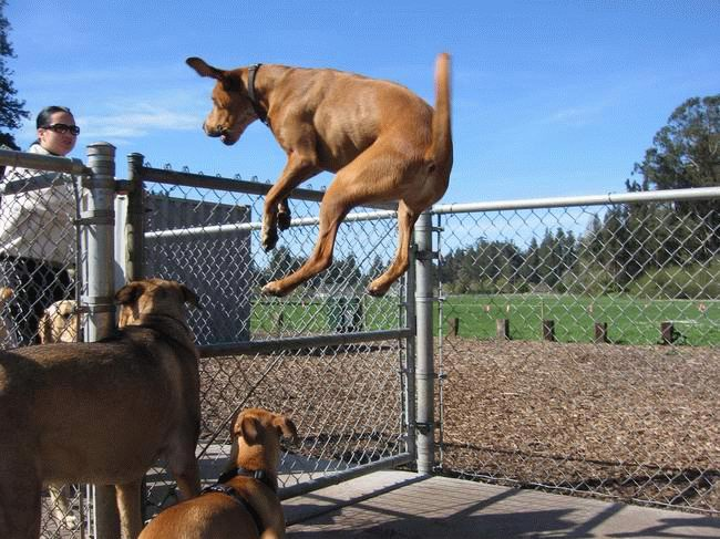wow jumping dog